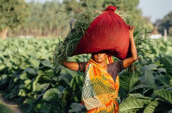 Farming systems in India