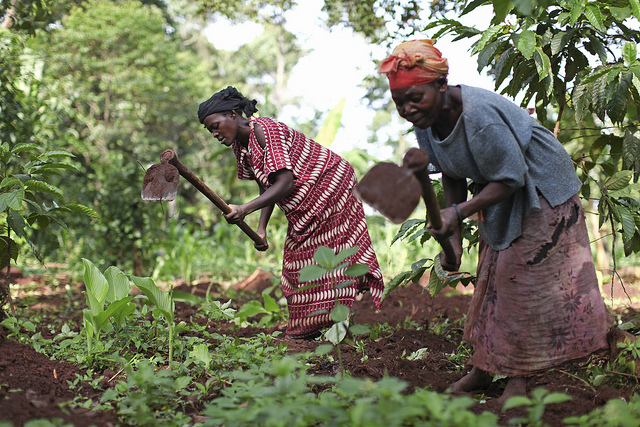 Does Poor-Quality Hinder Agricultural Technology Adoption