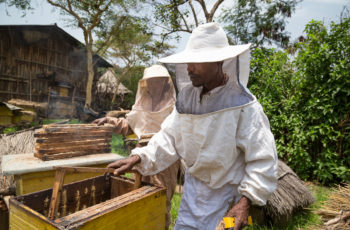 YEFAG KEBELE, LIBO KEMKEM WOREDA, AMHARA Abebaw Melesew and his wife Abay Desalegn work on their hives. Abebaw used the training he received from GRAD to turn around his beekeeping business. He is now a Model Farmer, training others to succeed in honey production.